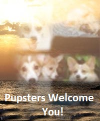Pupsters on the Rocks!!!!! photo Pupsters Welcome You.jpg